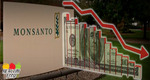 Monsanto Profits Drop 25% AGAIN As Farmers, Individuals Go Organic