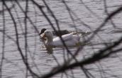 Kid Venture (aka Fire Castle Park) Duck Pond