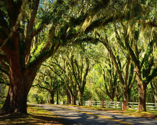 Tallahassee canopy road carla parris