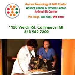 Animal Neurology