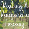 Visiting A Vineyard in Tuscany: What You Should Know