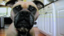 Video «Kuma Loves Freshpet» by Sean Clark