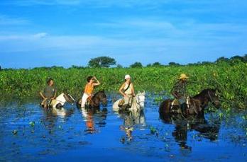 Balade à cheval dans les mangroves