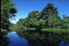 Les canaux de tortuguero au Costa Rica