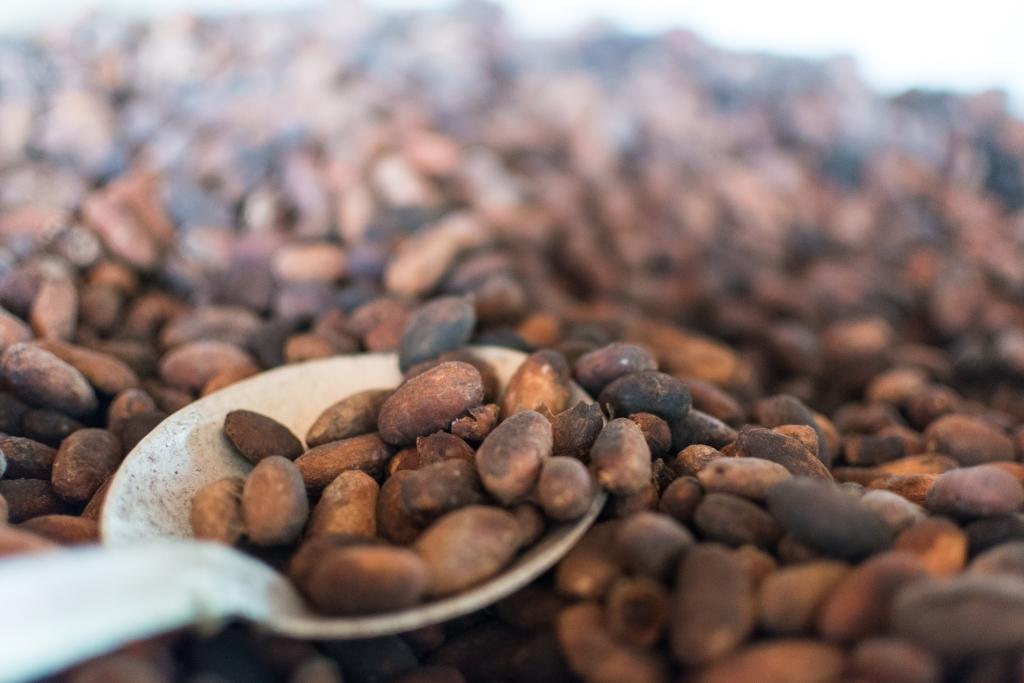 cacao-2$