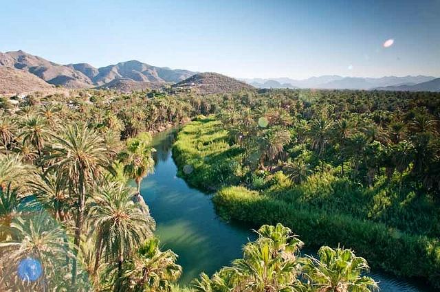 oasis-mulege-basse-californie