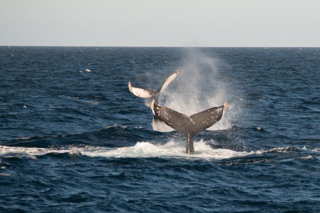 baleine-lagune-ojo-de-liebre