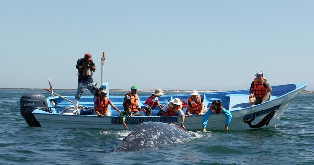 tour-baleine-basse-californie