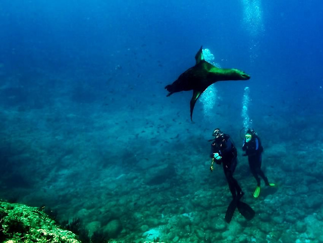plongee-mer-de-cortez