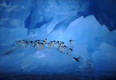 Pingouins_dans_un_monde_turquo