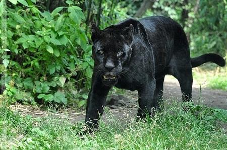 big_black_beauty-05e28