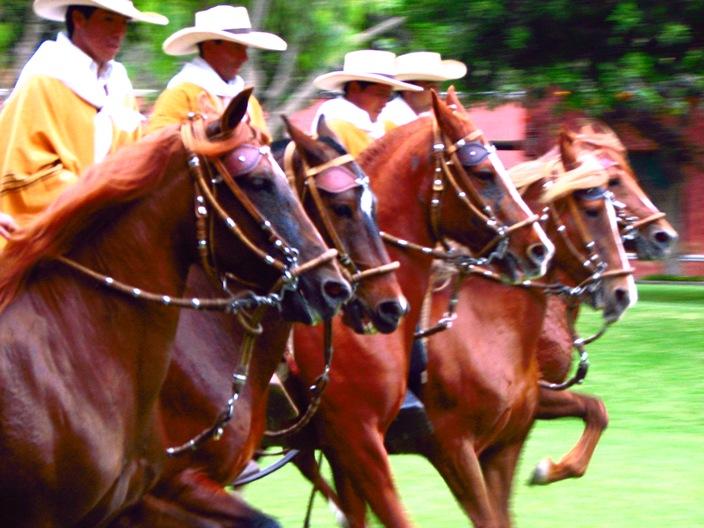 horse paso