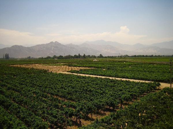 Tacama Vineyard Peru