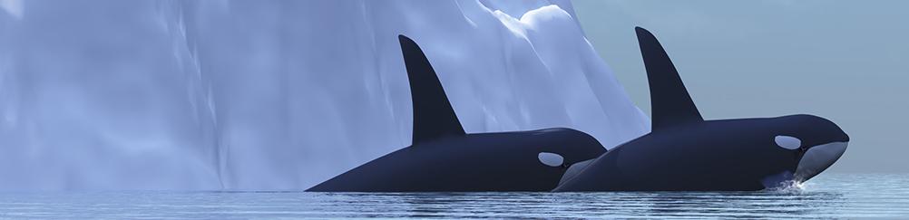 orques4