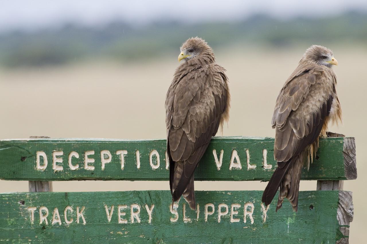 Deception valley au Botswana
