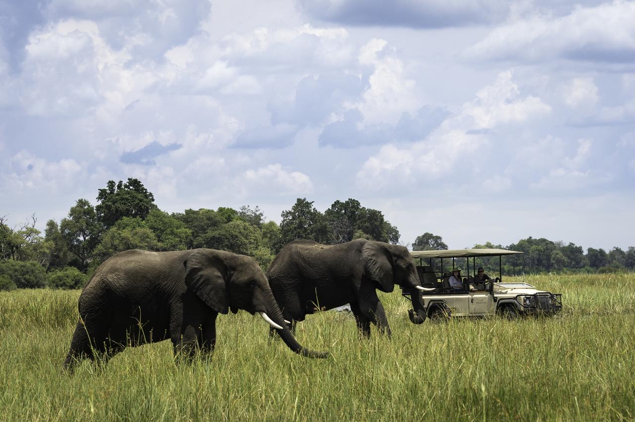 Safari dans la réserve de linyanti au Botswana.