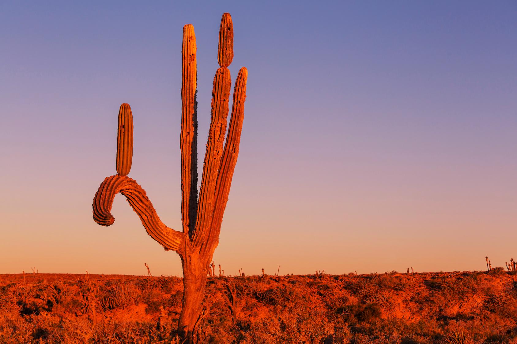 theme-landscape-desert