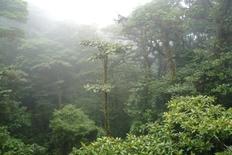 Monteverde National Park Costa Rica