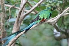San Gerardo de Dota National Park Costa Rica