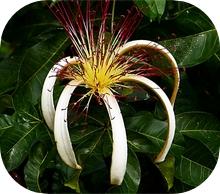 Costa Rica Flora and Fauna
