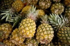 Costa Rica is one of the biggest exporters of pineapple in the world