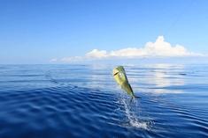 FISHING-COSTA-RICA