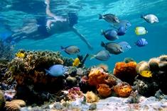 Diving Costa Rica