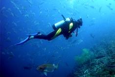 Diving Playa del Coco