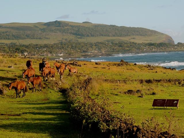 Chevaux en liberté sur l'Ile de Pâques