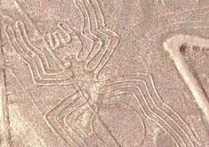 Le condor des géoglyphes de Nazca