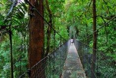 Balade sur les ponts suspendus du Parc Arenal