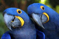 3-nature perroquet