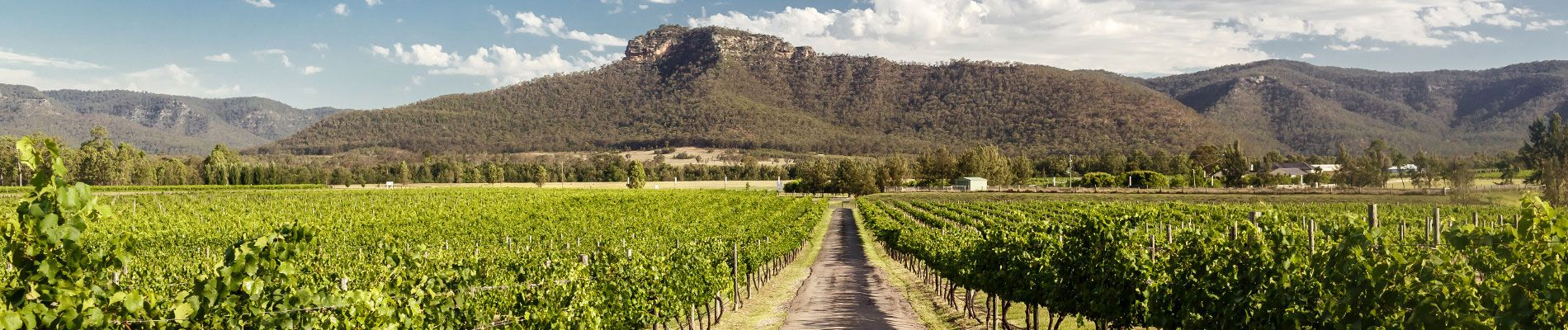 australie-hunter-valley-vineyards-st