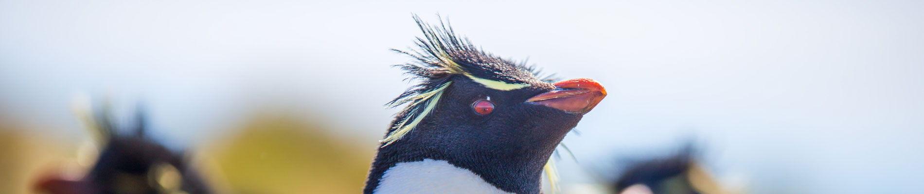 chili-pingouins-patagonie-st