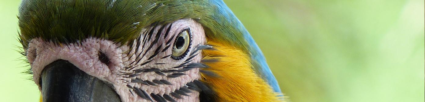 Ara-Costa-Rica-travel