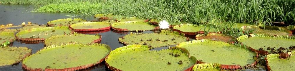 grands-parcs-amazoniens-1