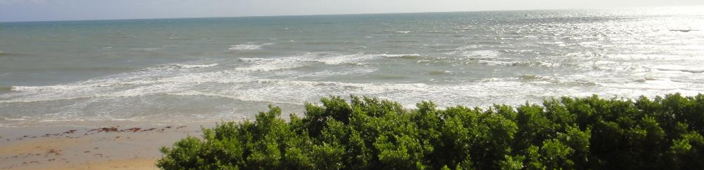 praia-da-baleia-plage.JPG