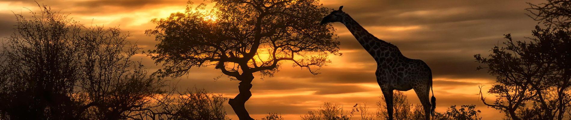 botswana-safari-girafe-st