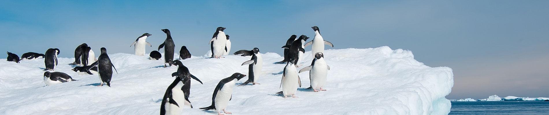 antarctique-pingouin-iceberg-croisiere-st