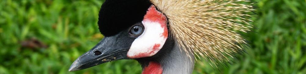 Bird in Iguazu