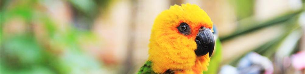 Bird in Santa Amaro