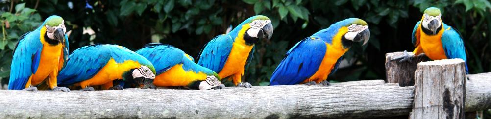 Macaw Bird, Pantanal