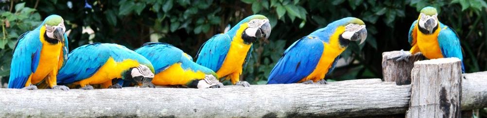 Macaw Birds, Pantanal