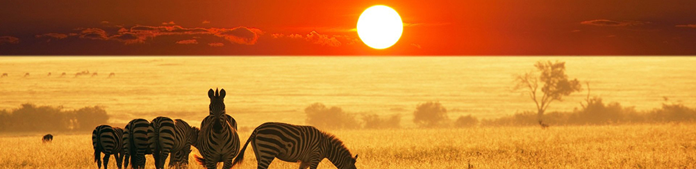 zebra-sunset-african-bush