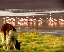 Our favorites tours in Bolivia with your local agency Terra Andina Bolivia