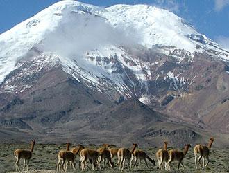 Diversity of Ecuador