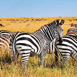 Terra Afrique du sud