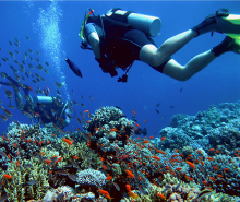 Diving in Fernando de Noronha