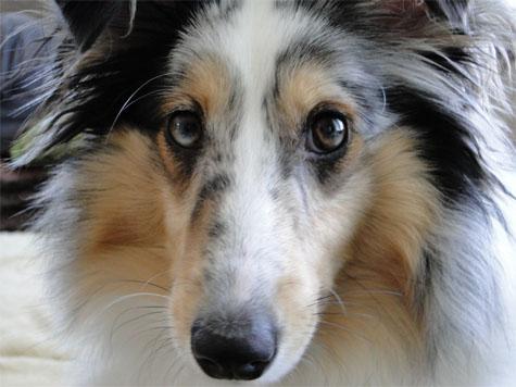O sortir avec son chien en mauricie 12 parcs sorties for Hotels qui acceptent les chiens