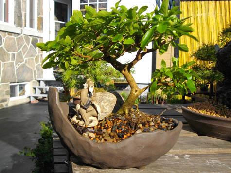 photo art et culture bonsa shawinigan